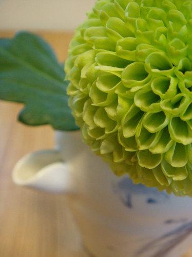 ピンポン菊 ①